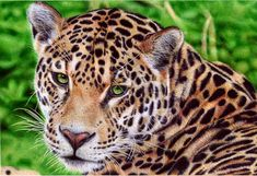 This is not a photo and not a painting. Would you believe this work of art was drawn with a ballpoint pen?  @DeviantArt