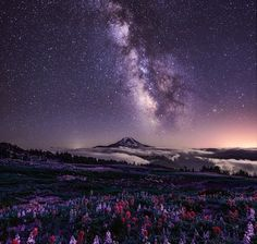 The Milky Way over a field of flowers and a snow-covered mountain