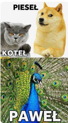 #memy Wtf Funny, Funny Cute, Funny Memes, Funny Animals, Cute Animals, Polish Memes, Dark Memes, Pokemon, Videos Online