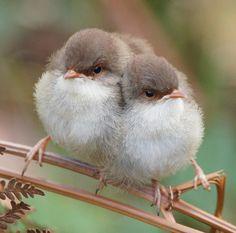 - Little Birds - animals Cute Birds, Pretty Birds, Beautiful Birds, Animals Beautiful, Animals And Pets, Baby Animals, Cute Animals, Bird Pictures, Animal Pictures