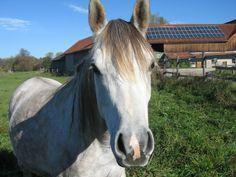 O cavalo era muito gentil :D.
