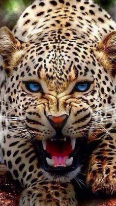 Snow Leopard Nature, Animals, Wildlife: The Beauty at one place Nature Animals, Animals And Pets, Cute Animals, Baby Animals, Smiling Animals, Angry Animals, Pretty Animals, Animals Planet, Beautiful Cats