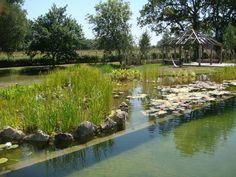 natural swimming pond, Tonbridge, Kent