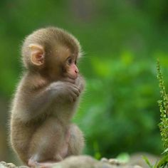Cute little baby - Silvia v. - Cute little baby Cute little baby - Baby Animals Super Cute, Cute Little Baby, Cute Little Animals, Cute Funny Animals, Baby Animals Pictures, Cute Animal Photos, Animals And Pets, Monkey Pictures, Wild Animals