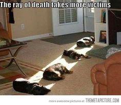 more victims...haha