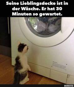 Seine Lieblingsdecke ist in der Wäsche..