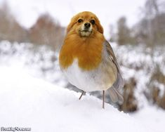 """dird"" (dog+bird)"