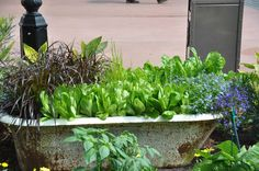 Cool ideas from Epcot International Flower and Garden Festival. Planning to attend next year!