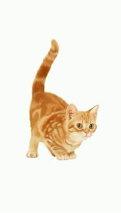 = Kittens Cutest, Cats And Kittens, Animals And Pets, Baby Animals, Ginger Cats, Cat Drawing, Cat Tattoo, Cat Design, Grumpy Cat