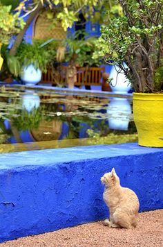 Day spent in the Majorelle gardens in Marrakech... http://www.traveling-cats.com