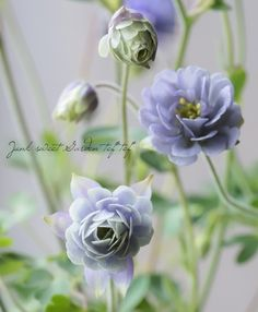 Yard Art Crafts, Garden Crafts, Garden Art, Green Flowers, Love Flowers, French Cottage Garden, Glass Wind Chimes, Plant Painting, Garden Images