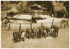 """Carl Hagenbeck's Animal Paradise was called the """"largest rrepresentation of an animal paradise ever constructed.""""  The attraction was actually twoattractions - One,Carl Hagenbeck's Circus, which included trained animals, death defying feats and clowns and other `circusy' goings on. The other half was a rather surprising wide open and natural animal sanctuary- quite different than the animals in small cages zoos that were common at this era."""