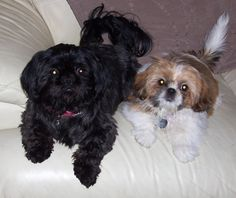 my 2 beautiful girls missy and tilly!!