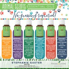 The Animal Scents line is incredible and since they are already diluted, no guessing is required! These oils are VERY economical! This is another example of what sets Young Living apart. These oils carry the Seed to Seal guarantee.
