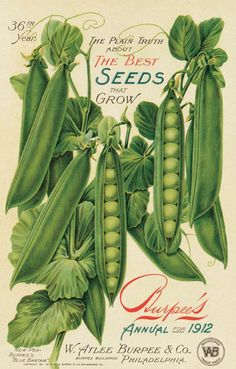 """""""Burpee's Seed Packet From 1912"""" graphic ........... #DIY #graphics #typography #vintage #furniture #decor #crafts"""