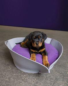 NOOK Felt stylish dog beds, stylish dog beds,orthopeadic dog beds,dog cushion