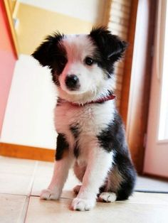 It's a Cuties Puppies pictures hire is find cute puppies and dogs pictures, if you love animals here is Cutest Puppies Altogether To Make You Say Aww. we find best collection around the world and share with friends, if you are pet lover share your pet picture with us via email we share soon.