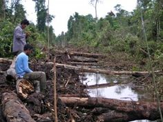 Both the Sekonyer Community and endangered orangutans are losing their forest homes.
