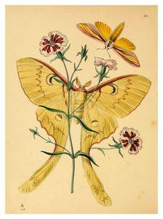 http://www.liberation.fr/livres/2014/04/16/les-faits-papillons_998850 De Fredrik Sjöberg, «La Troisième Ile», est à la fois un facétieux au...