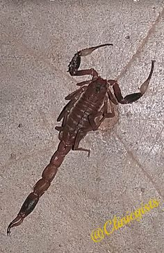Scorpion, scorpion bite, how to prevent scorpion bite Dangerous Animals, Hidden Places, Scorpion, Reading, Scorpio, Reading Books