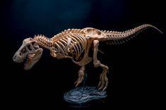 T-Rex by Lazar Djordjevic