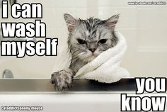 Poor kitty! Come to The Cat Doctor for pampering. www.thecatdoctoronline.com