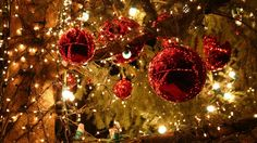 Christmas Trees Decorated In Red And Gold - wallpaper.
