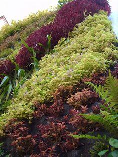 verde 360º muro verde, jardín vertical lleno de texturas y colores