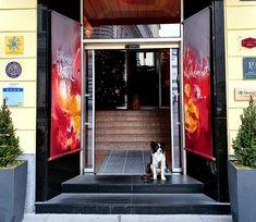 Dogfriendly Check: Hundefreundliches Hotel in Wien Bezirk, Praterstern)