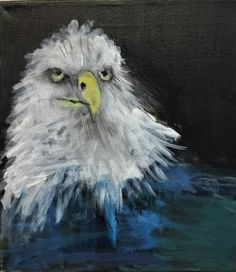 'Bald Eagle' acrylic painting by young student Bradley M. Buy Art Online, Original Art For Sale, Local Artists, Art School, Bald Eagle, Art Gallery, Wildlife, Student, Portrait