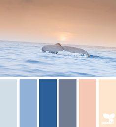 color swim