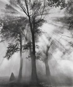 This picture, to me, presents order: the symmetry of the perfect strokes of light glaring through the sturdy upright trees. This is a balanced photograph with plenty of detail in the background and the three trees maybe introducing the rule of thirds, the two behind attractively framing the closest tree.