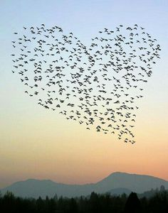 Birds flying in Heart shaped formation #loveisallaroundus