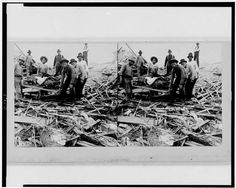 Carrying out bodies just removed from the wreckage, Galveston 1900 Galveston Hurricane, Texas Hurricane, Hurricane Katrina, Galveston Island, Galveston Texas, Hurricane History, San Francisco Earthquake, Tornadoes, Natural Disasters