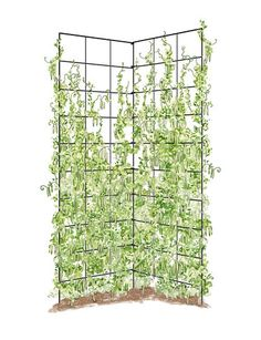 How To: Inexpensive Garden Trellis | Wire Trellis, Clematis And Gardens