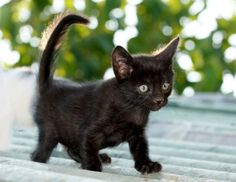 adopt a kitten for free   Cute Cats Pictures