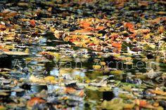 Naturfotografie Foto Herbstfluss von ArtvanArnhem auf Etsy, €4.95