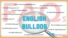 English Bulldogs - FAQs