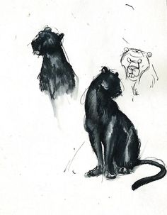 Sketches of Bagheera, from the jungle book, done with ink. -winderly