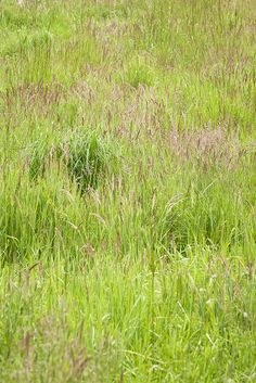 Grassy field near Joy Creek Nursery in Scappoose, OR - Spring 2011