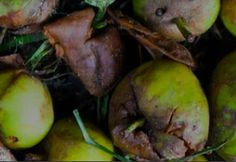LeanPath has put together this blog, which presents interviews with people who have adopted the food waste tracking system - a great insight into how each kitchen overcomes barriers at the start of the process.