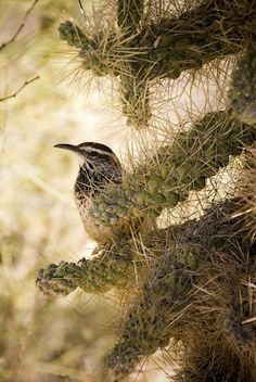 . Girl Scout Camping, Desert Animals, Living In Arizona, Backyard Plants, State Birds, Desert Art, Arizona State, Wren, Tucson