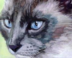 Alex Carter - watercolour cat (hva)