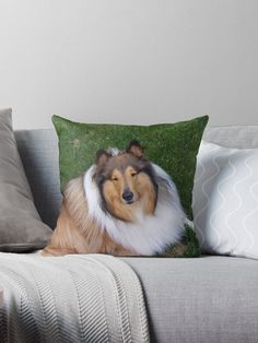 Collie throw pilliw