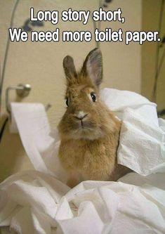 15 Hilarious and Adorable Bunny Memes - Funny Animal Jokes, Funny Animal Memes, Funny Animal Pictures, Cute Funny Animals, Cat Memes, Cute Baby Animals, Funny Cute, Hilarious Memes, Cute Baby Bunnies