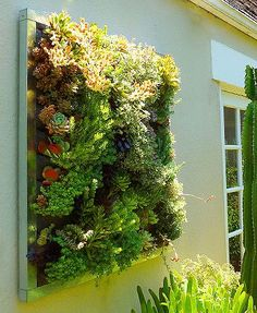 Vertical Wall Garden can be inside or outside