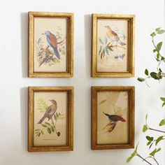 Avian Framed Prints (Set of 4) | Hang this artful print above your living room seating group to create a stylish conversation space, or display it in the foyer for eye-catching appeal.