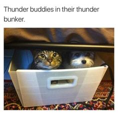 Thunder buddies in their thunder bunker Dog and cat together hiding from storm