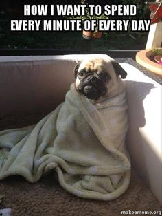 How I want to spend every minute of every day -Pug