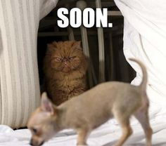 This is why I hate cats.. Lol. They're evil.